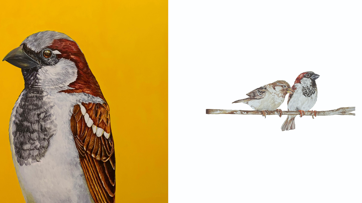 Visual Arts Gallery, A bird call, Solo Exhibition, Rupa Samaria, Ornithological painting, Conservation, Paintings, Sculpture, Interactive art, New Delhi